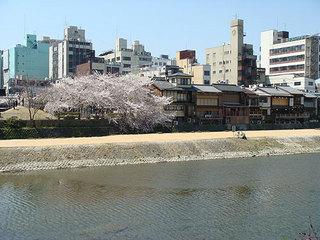 桜い.jpg