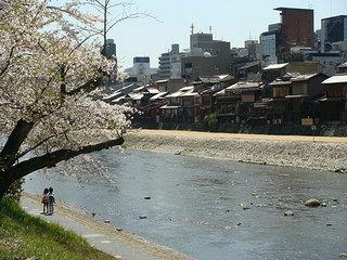 桜う.jpg